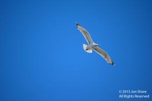 gull5061