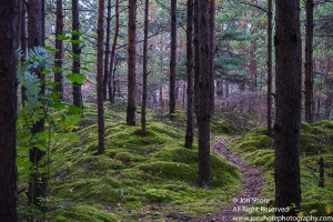 Liepaia forest sm 2310-43